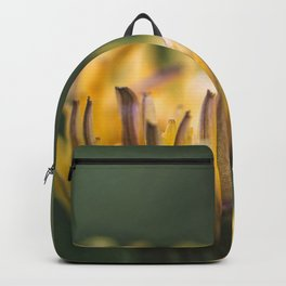 It touches the colors Backpack