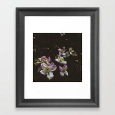 A trail of flowers Framed Art Print
