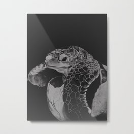 Hatching turtle in black and white Metal Print