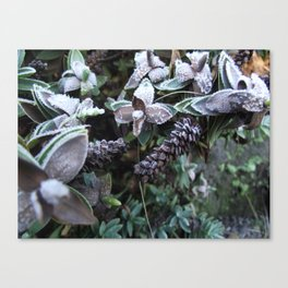 Frost Kissed Canvas Print