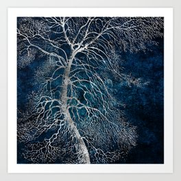 Midnight Silver tree - Black Poplar Art Print