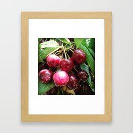 Cherrys Framed Art Print
