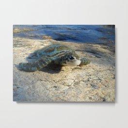 Green Sea Turtle Wool Sculpture Metal Print