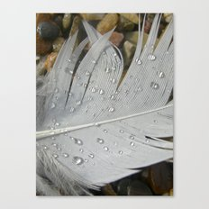 feather macro XIII Canvas Print