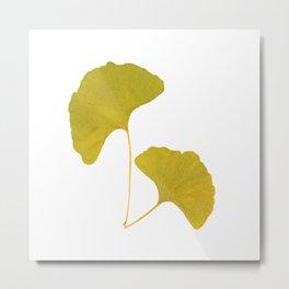Ginkgo Leaves... Metal Print