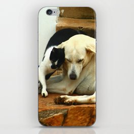Like cats and dogs iPhone Skin
