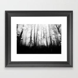 Forest III Framed Art Print