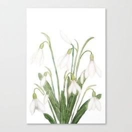 white snowdrop flower watercolor Canvas Print