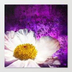 Krinkle White Peony On Purple Canvas Print