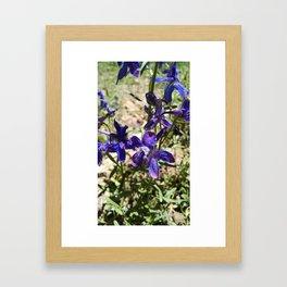 Blue Larkspur Framed Art Print