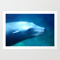 seal Art Prints featuring seal by Bunny Noir