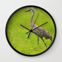 Strolling Sandhill Crane Wall Clock