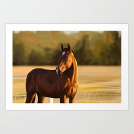 Looking of to the sunset Art Print