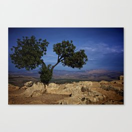 Forest of One Canvas Print