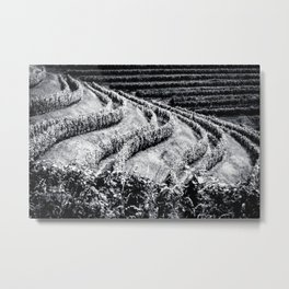 The fields of Friuli Venezia-Giulia cultivated with grapevines Metal Print