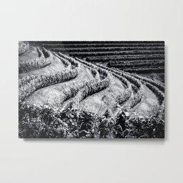 The fields of Friuli Venezia-Giulia cultivated with grapevines Metal Print