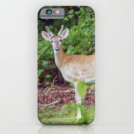 Young Buck in Velvet iPhone Case