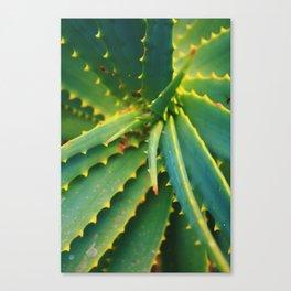 Spiral Green Succulent Aloe Plant Canvas Print