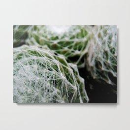 Leslie the Cactus  Metal Print