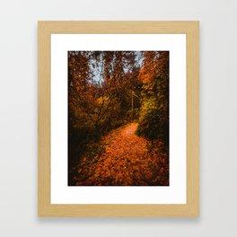 Autumn Arboretum Framed Art Print