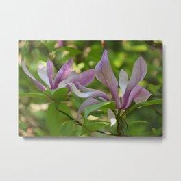 Floral Seasonal Magnolia Metal Print