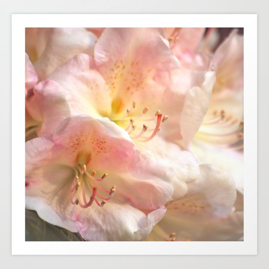 Delicate Flowers In Pink Shades Art Print