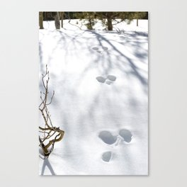 Tracks in the Snow - Rocky Mountain National Park Canvas Print