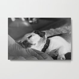 Dozes and Noses Metal Print