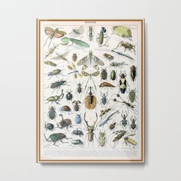 Adolphe Millot- Vintage Insect Print Metal Print