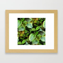 Hosta and English Ivy - Seamless Framed Art Print