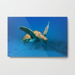 Bajan Turtle 2 Metal Print