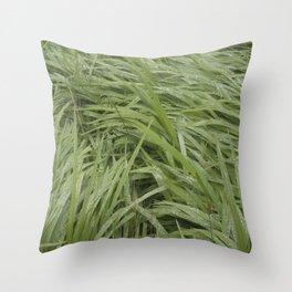 California Grass & Dew Throw Pillow
