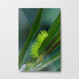IO moth caterpillar Metal Print