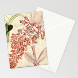 Flower 4533 medinilla magnifica Magnificent Medinilla1 Stationery Cards
