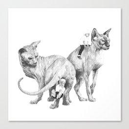 Spynx Cat Canvas Print