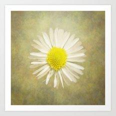 Daisy Art Print
