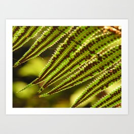 Early Morning Fern Art Print