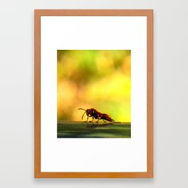 Dying Potter wasp Framed Art Print