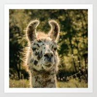 llama Art Prints featuring Llama by LudaNayvelt