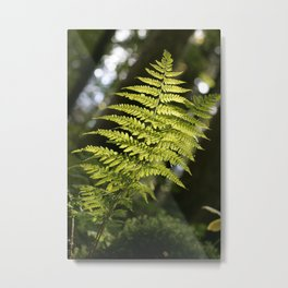 fern in the light, in the Tyrolean Forest, color photo Metal Print