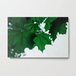 Green Maple Metal Print