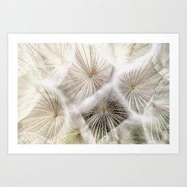 Into the deep- Dandelion Seed Head- Close up Art Print