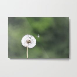 Dandelion Wish Come True Metal Print