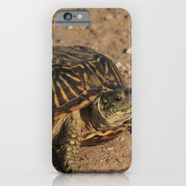 Kansas  Box Shell Turtle closeup iPhone Case