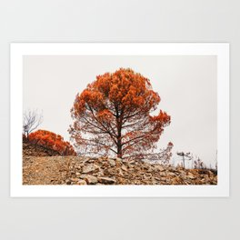 Orange and black tree after forest fire, Algarves, Portugal   Photo Print, Travel Photography Europe Art Print
