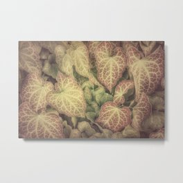 FOR THE LOVE OF IVY Metal Print
