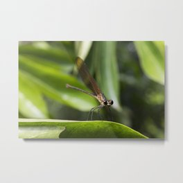 Baby Dragonfly - Insects Photography Metal Print