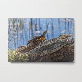 Painted turtle on a log Metal Print