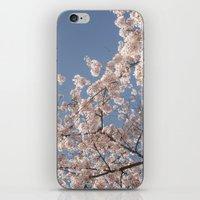 cherry blossoms iPhone & iPod Skins featuring  Cherry Blossoms  by cescabear
