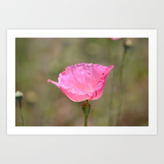 June Poppy Art Print